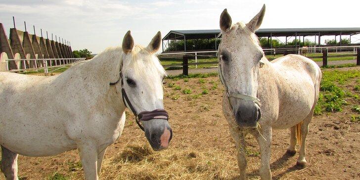 Návštěva ranče nedaleko Prahy: jízda na koni i krmení zvířátek