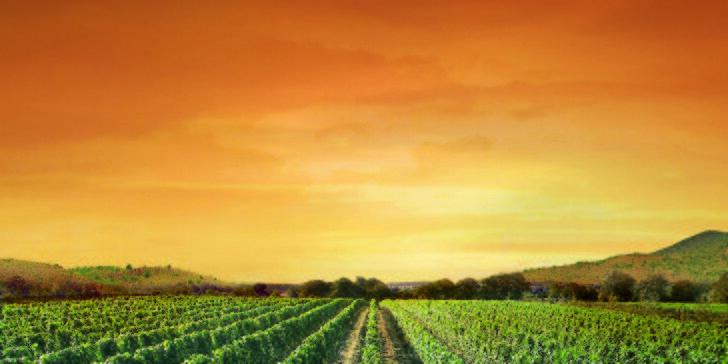 Bočva - víno plné slunce