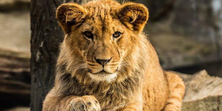 Jednodenní fotokurz v zoo: Olomouc, Zlín, Brno, Vyškov, Hodonín nebo Ostrava