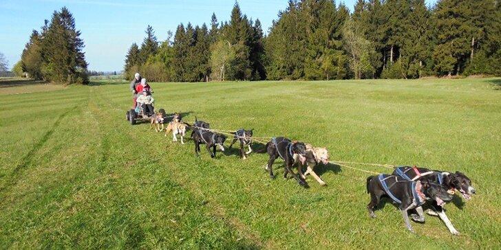 Jízdy se psím spřežením na 60 minut ve dne nebo v noci až pro 2 osoby