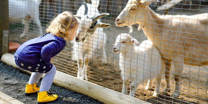 Za koupáním, zvířátky i poznáním: jednodenní výlet do zooparku Berousek a na Máchovo jezero
