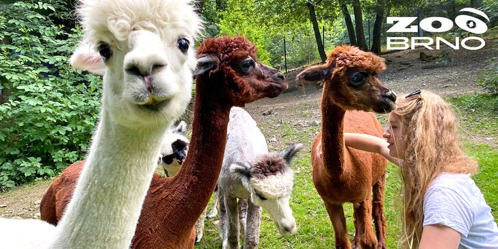 Pro skutečné milovníky zvířat: chovatelem na jeden den aneb péče o koně, krávy i lamy