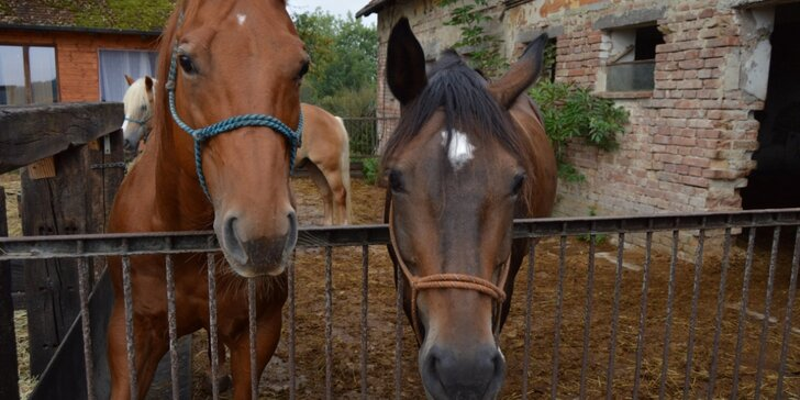 2 hodiny na ranči: péče o koně i vyjížďka do přírody až pro 2 osoby