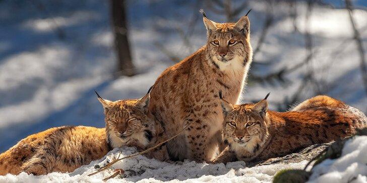Víkendový kurz fotografování v NP Bavorský les: krásná krajina a divoká zvířata