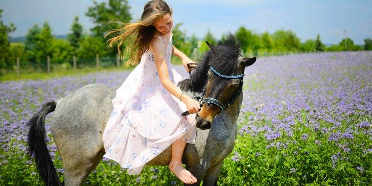 Prožijte fajn den u koní: seznámení, péče i jízda pod dohledem trenéra