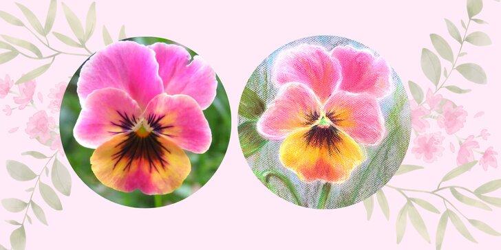 Namalujte si své štěstí: online kurz Maceška pastelem snadno a krásně