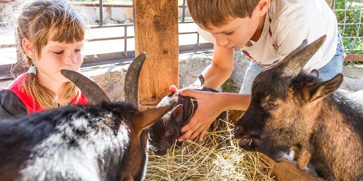 Pobyt na rodinné farmě plné zvířátek: polopenze, masáž i prohlídka a krmení
