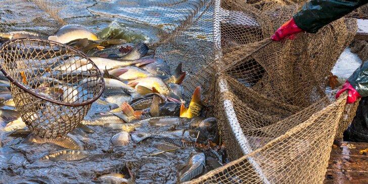 Velikonoční výlov rybníka v Šenově: 200–500 Kč na ryby nebo pochoutky z nich či něco k pití