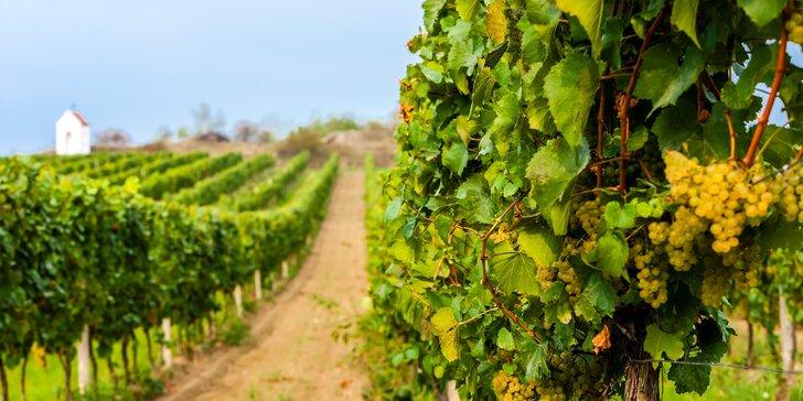 Vinařský pobyt na jižní Moravě: neomezená konzumace vína i vstup do sauny