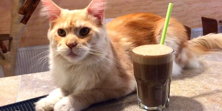 V milé společnosti: káva a slaďoučký dezert v kočičí kavárně pro 1 nebo 2 osoby