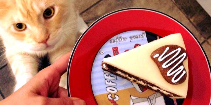 Otevřený voucher v hodnotě 300 Kč do kočičí kavárny