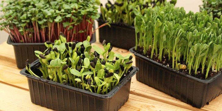 Microgreens plné živin a vitamínů: ředkvička, slunečnice nebo hrách