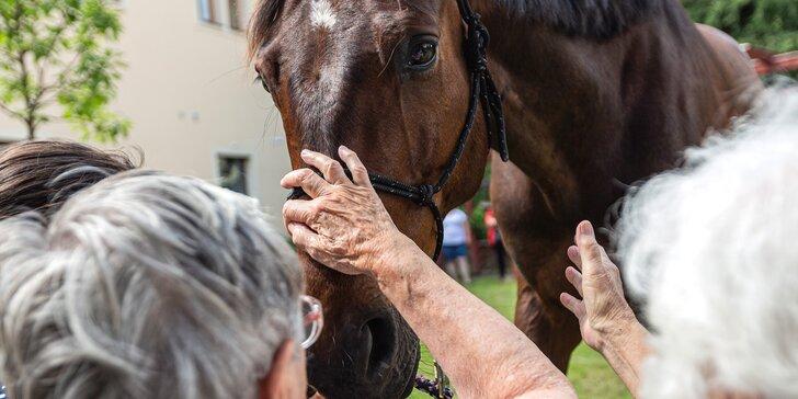 Asistenční jednorožec: přispějte na návštěvy terapeutického koně u seniorů a nemocných lidí