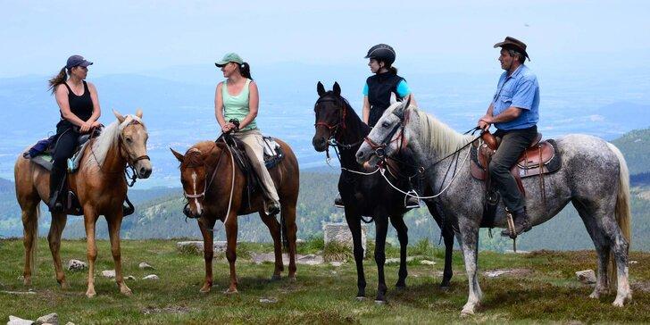 Svět ze sedla: vyjížďka na koni nebo výcvik v jízdárně pro 1 osobu