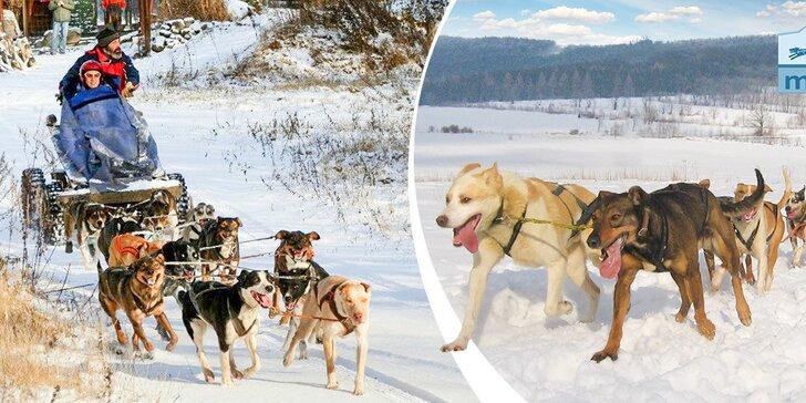 Zážitková jízda se psím spřežením po Vysočině