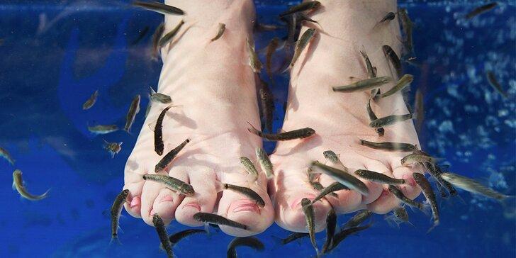 Ozdravná koupel nohou s rybičkami Garra Rufa a bublinková lázeň