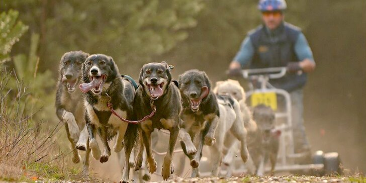 Jizerky jinak - jízda na káře tažené psím spřežením pro 1 nebo 2 osoby
