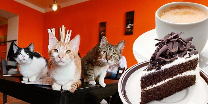 Mlsání v kočičí kavárně: Káva či domácí limonáda a dezert v prima partě