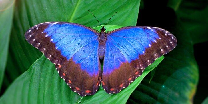 Seznamte se s nejkrásnějšími motýly planety - vstup pro jednoho nebo rodinu