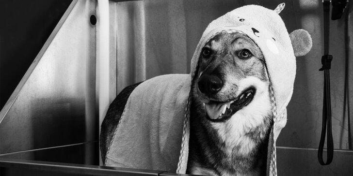 Vítejte v Dogs Clubu: Exkluzivní péče pro vašeho psího miláčka