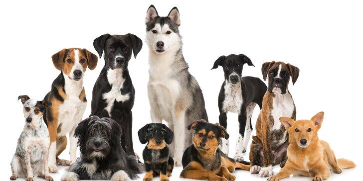 Fyzioterapie, rehabilitace a masáže psů - Dog's Health