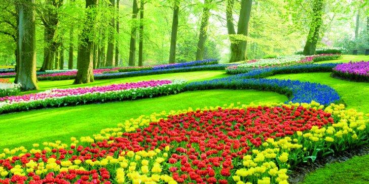 Navštivte rozkvetlé Holandsko - doprava, 2 či 3 noci v hotelu a služby průvodce
