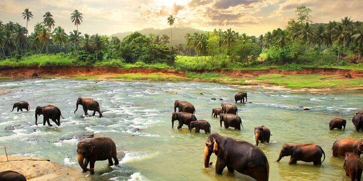 Za slony na Srí Lanku: prosincový zájezd na 7 nocí s polopenzí a průvodcem