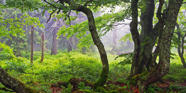 Klid a panenská příroda v oblasti Rýchory: Odpočinková dovolená s polopenzí