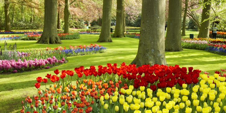 Amsterdam, burza květin, Alkmaar, Zaanse Schans, Keukenhof, Delft, Rotterdam