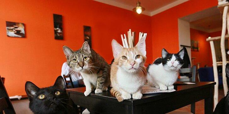 Zamlsejte si mezi šelmičkami: 2 dezerty dle denní nabídky v kočičí kavárně