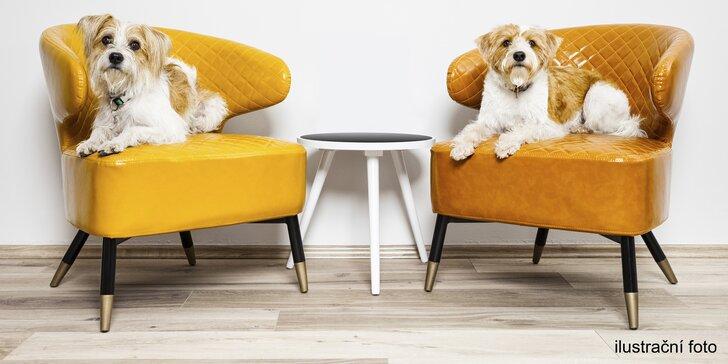 Pobyt ve VIP psím hotelu pro malé a střední pejsky