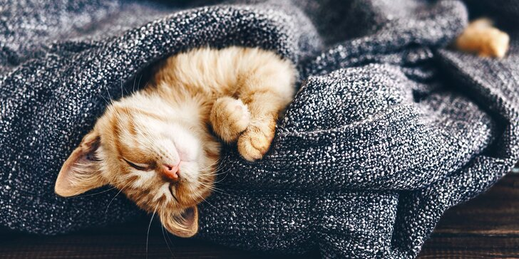 I vaše micka si zaslouží dovolenou - den ve VIP kočičím hotelu včetně krmení