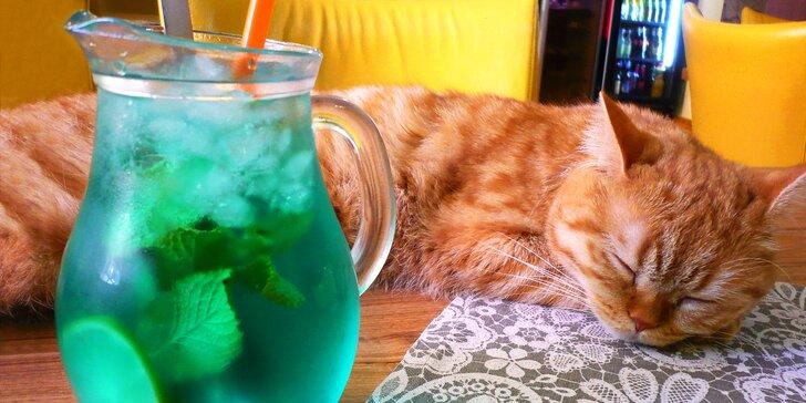 Domácí limonáda i dezert v centru Brna s mazlivou kočičí společností