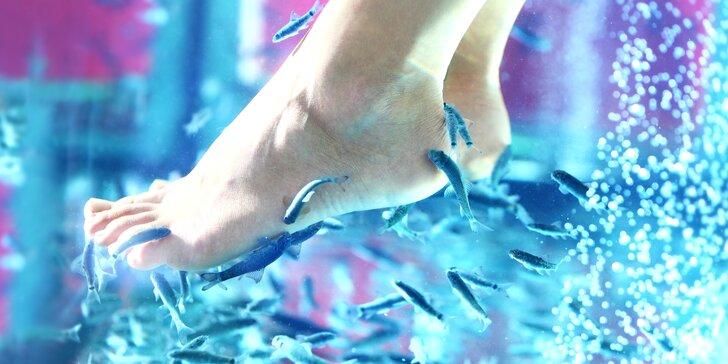 Koupel nohou s rybkami Garra Rufa: 20–40 minut nebo permanentka