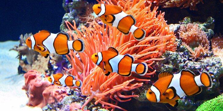 Hurá za rybkami z Mořského světa: Vstupenky pro celou rodinu