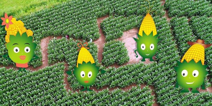 Vymotejte se z největšího kukuřičného bludiště: vstupy pro děti i dospělé