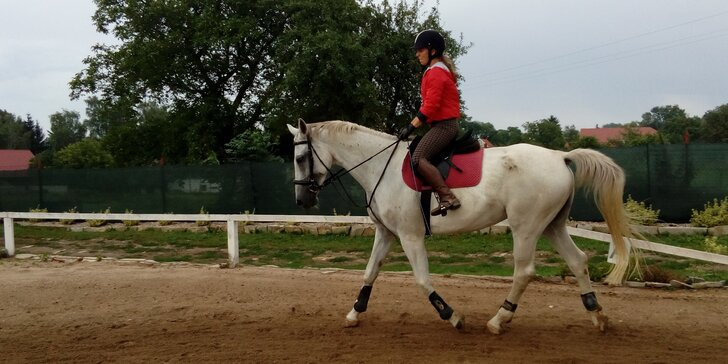 Sobota v sedle: Zážitkový den u koní s jízdami, teorií i obědem pro 2 osoby