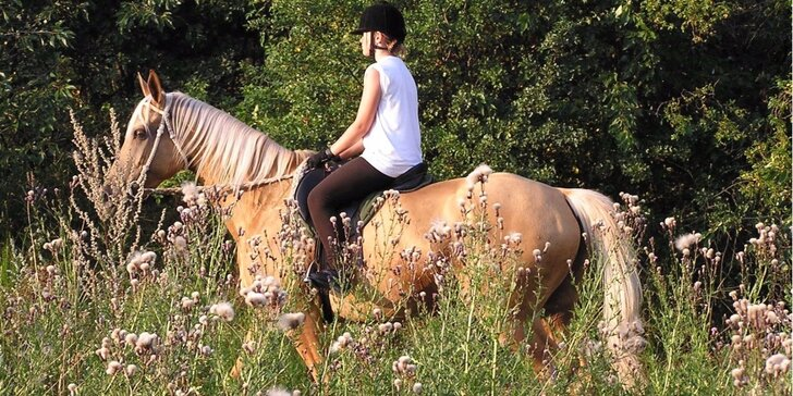 Hodinka na koňském hřbetu - výuka na jízdárně či vyjížďka do přírody