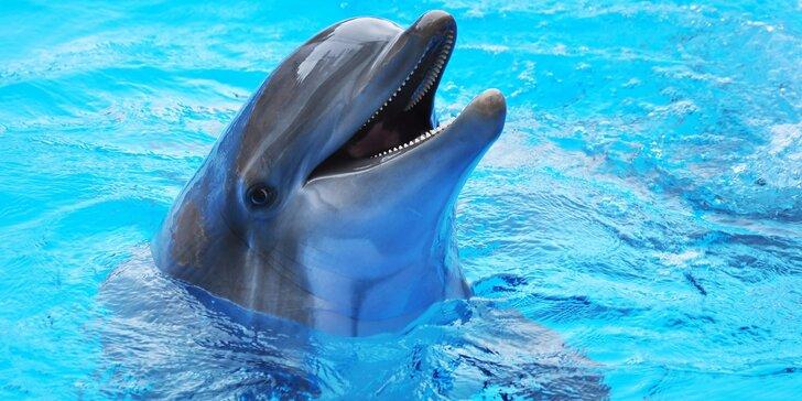 Den v Norimberku a v místní ZOO s delfináriem: delfíni, kapustňáci a lachtani