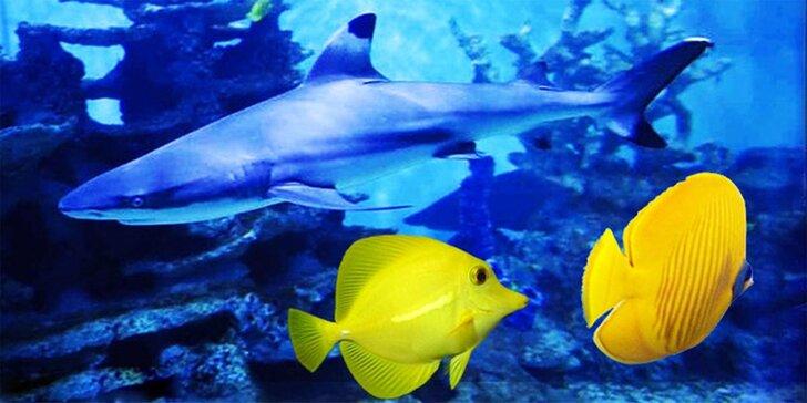 Za barevnými rybkami do Mořského světa – vstupenky pro celou rodinu
