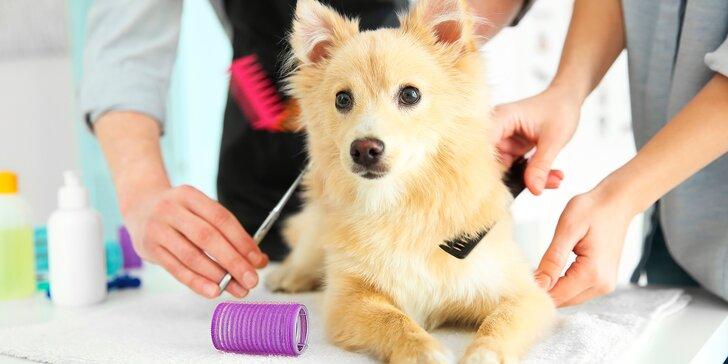 Péče o psí srst: koupání, česání i regenerace kvalitní přírodní kosmetikou