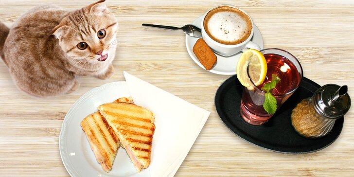 Výtečná svačinka v kočičí kavárně u Stodolní: káva, limonáda a toast pro 1 nebo 2