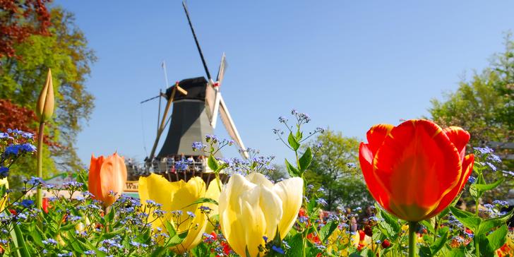 Výlet do květinového parku Keukenhof, skazenu Zaanse Schans a Amsterdamu