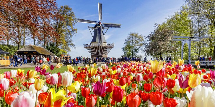 Holandsko na 1 noc: tulipány, sýry, Amsterdam a příp. květinové korzo