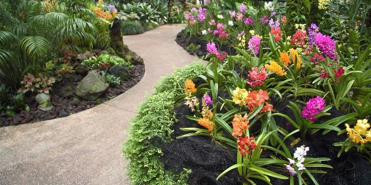 Největší výstava orchidejí v Rakousku a návštěva Vídně z Brna a Mikulova