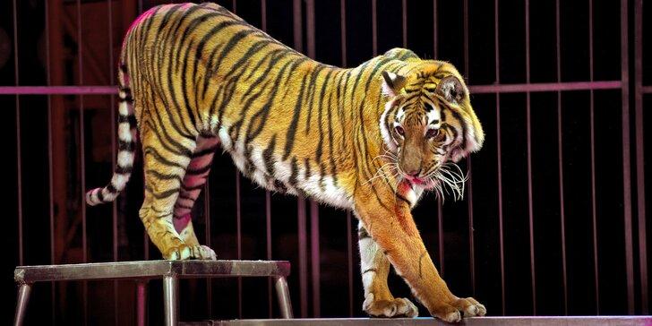 Vstupenky na představení cirkusu Venasis pro děti i dospělé