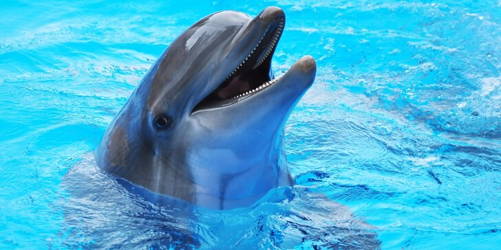 Návštěva Norimberku: za památkami i do zoo s delfíny, kapustňáky a lachtany