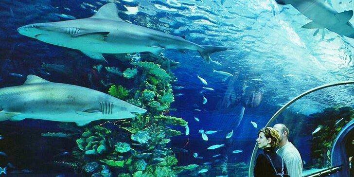 Výlet do Tropicaria v Budapešti, největšího mořského akvária ve střední Evropě
