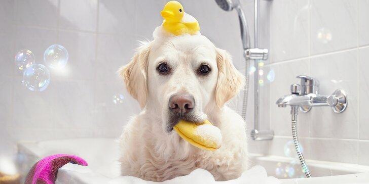 Wellness v psím salonu: Koupání, masáž i vířivka pro čtyřnohé kamarády