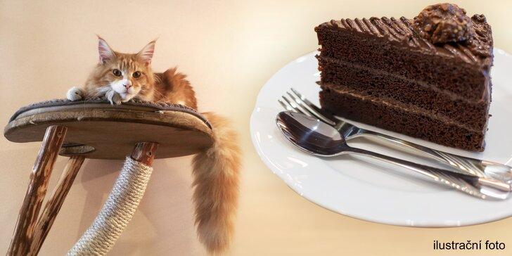 Něco pro kočkomily: káva s dortem v kočičí kavárně pro 1 nebo 2 osoby